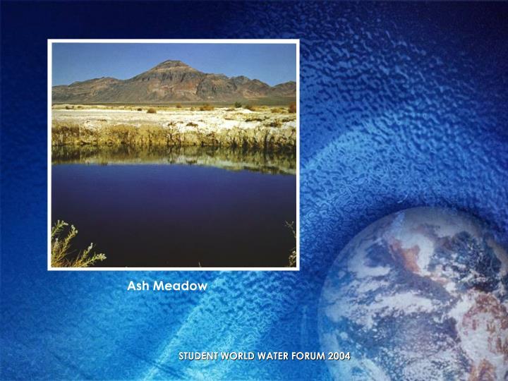 Ash Meadow
