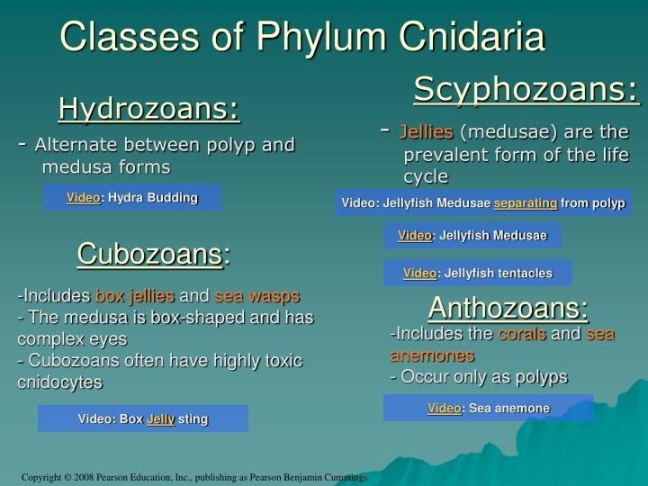 Hydrozoans: