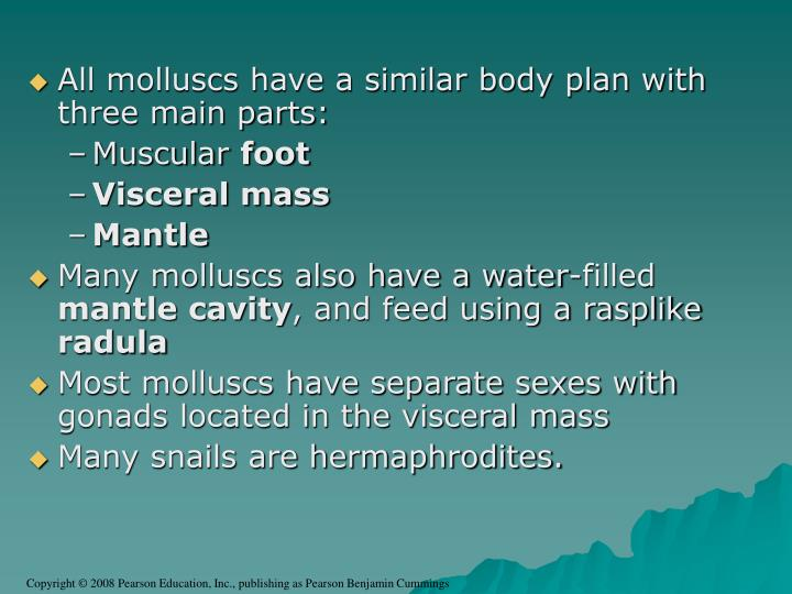 All molluscs have a similar body plan with three main parts: