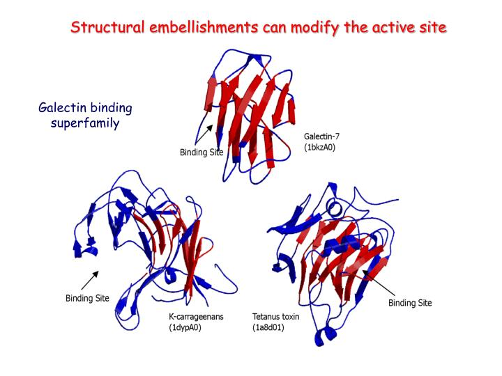 Structural embellishments can modify the active site