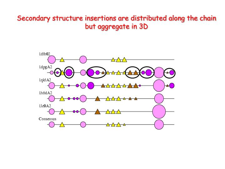 Secondary structure insertions are distributed along the chain but aggregate in 3D
