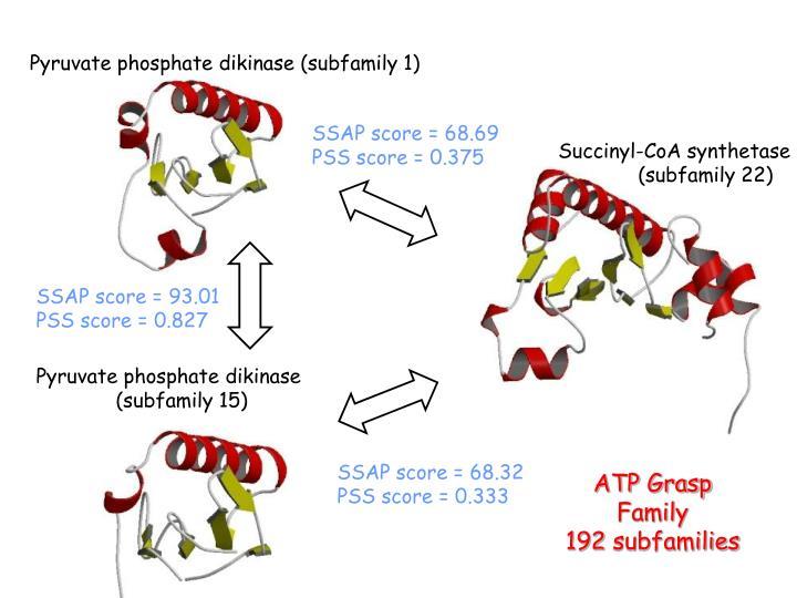 Pyruvate phosphate dikinase (subfamily 1)