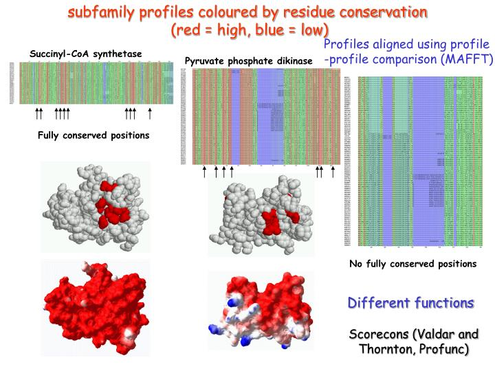 subfamily profiles coloured by residue conservation