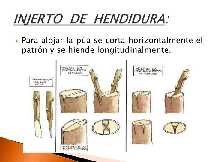 INJERTO  DE  HENDIDURA