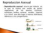 reproduccion asexual