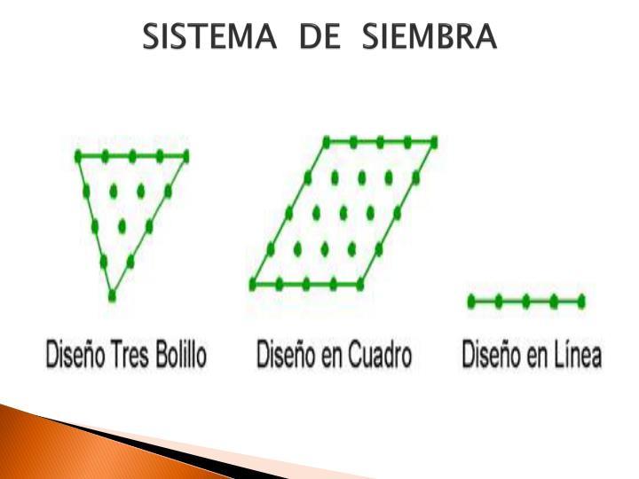 SISTEMA  DE  SIEMBRA