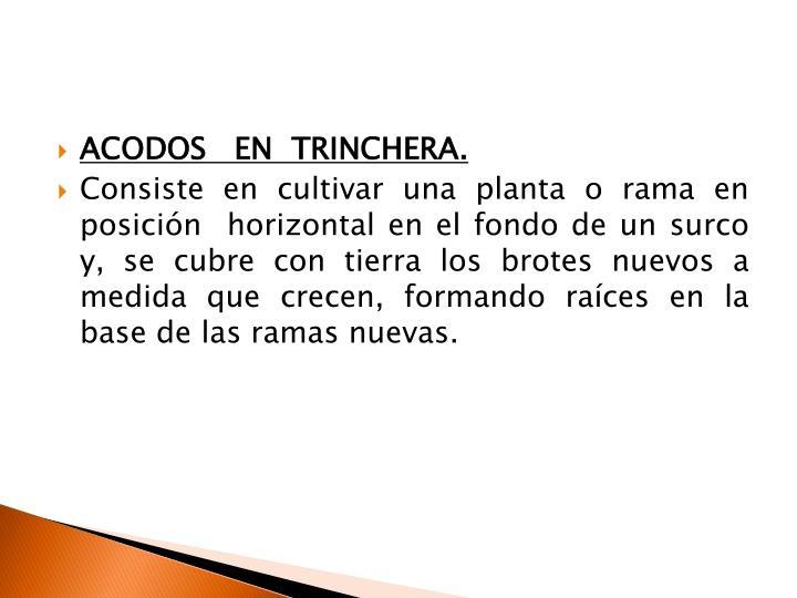 ACODOS   EN  TRINCHERA.