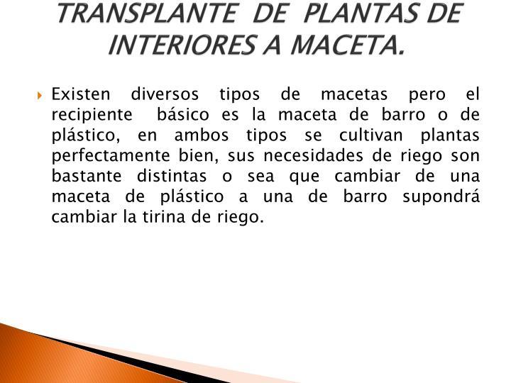 TRANSPLANTE  DE  PLANTAS DE INTERIORES A MACETA.