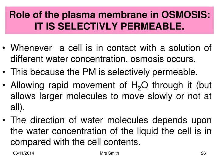 Role of the plasma membrane in OSMOSIS: IT IS SELECTIVLY PERMEABLE.
