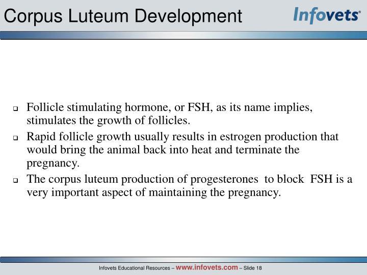 Corpus Luteum Development