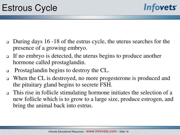 Estrous Cycle