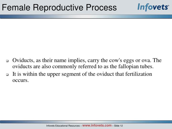 Female Reproductive Process