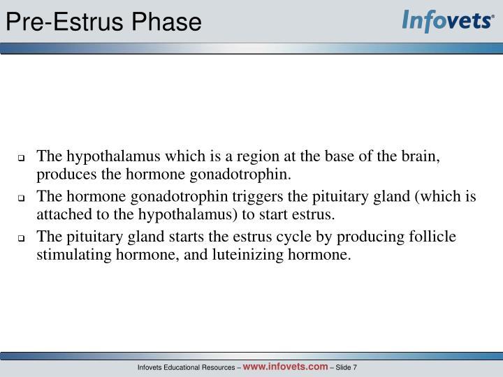 Pre-Estrus Phase