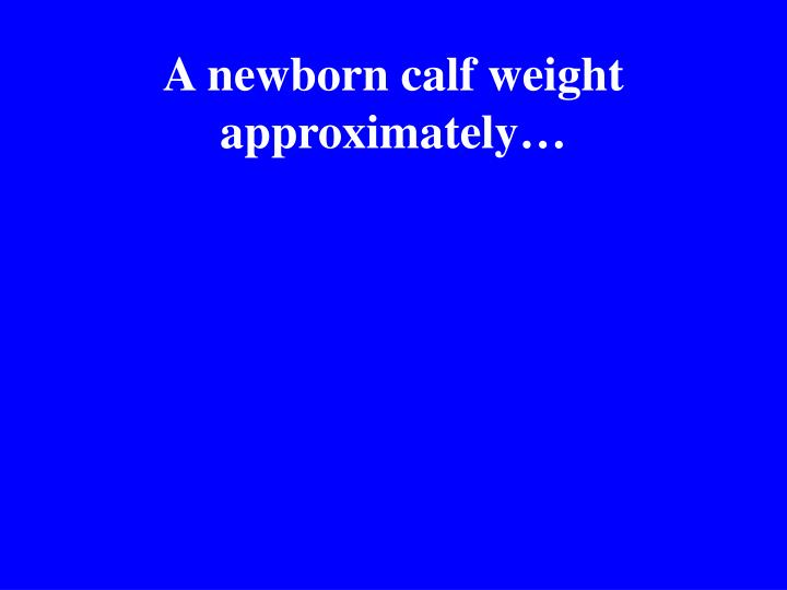 A newborn calf weight approximately…