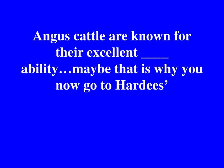 Angus cattle are known for their excellent ____ ability…maybe that is why you now go to Hardees'