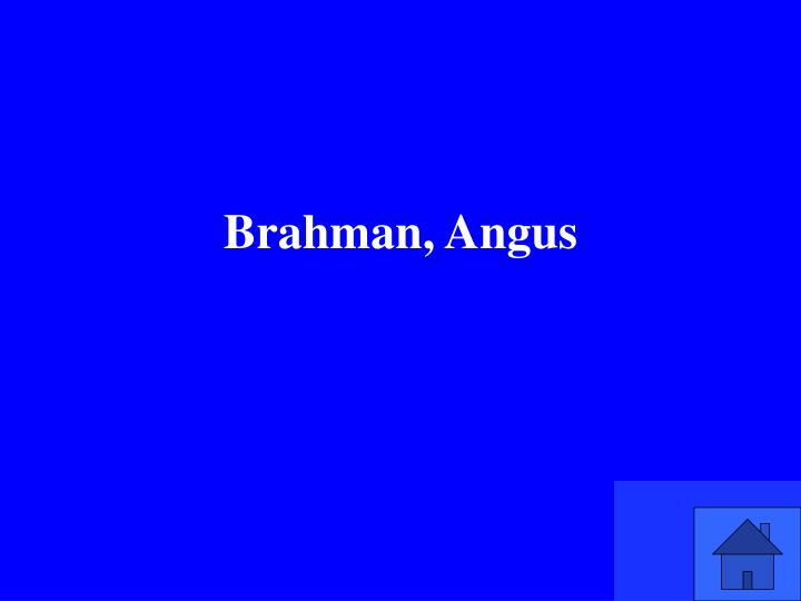 Brahman, Angus