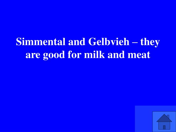 Simmental and Gelbvieh – they are good for milk and meat