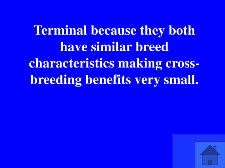 Terminal because they both have similar breed characteristics making cross-breeding benefits very small.