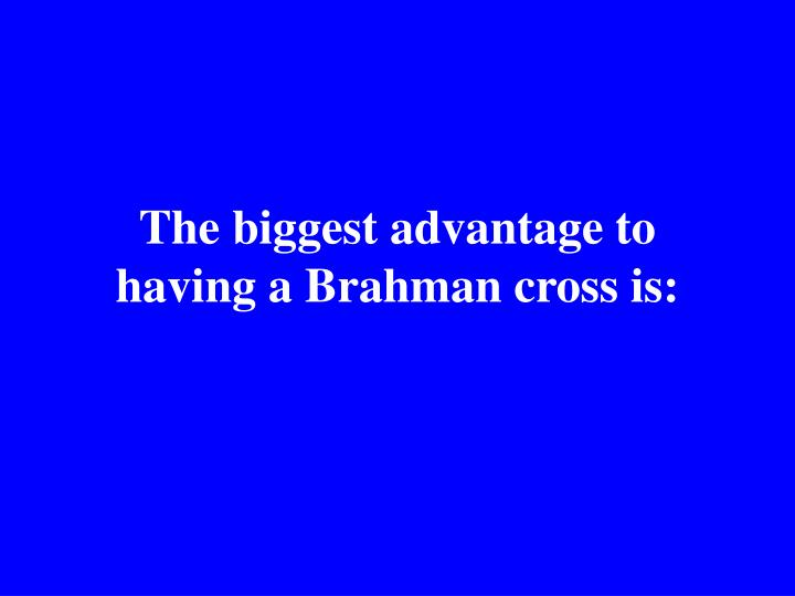 The biggest advantage to having a Brahman cross is: