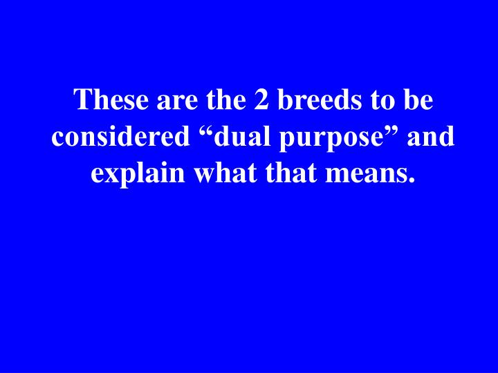 "These are the 2 breeds to be considered ""dual purpose"" and explain what that means."
