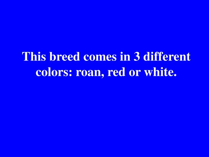 This breed comes in 3 different colors: roan, red or white.