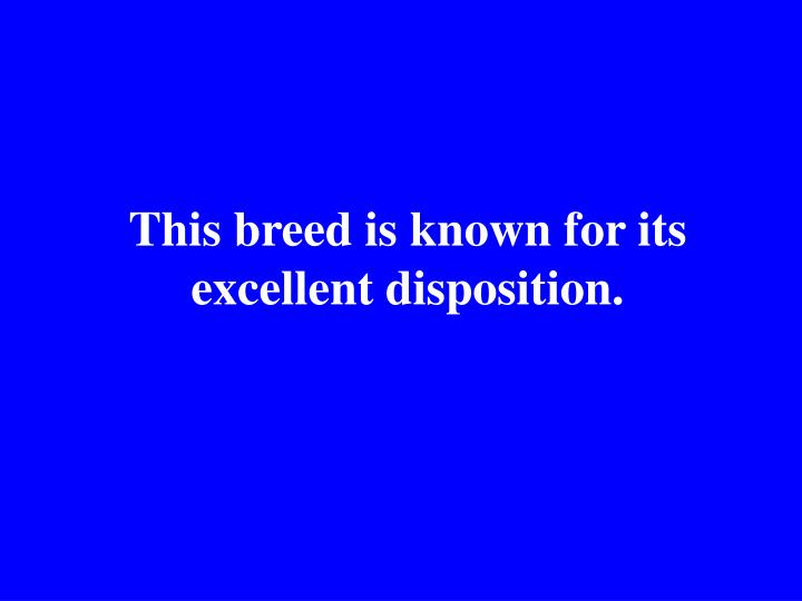 This breed is known for its excellent disposition.