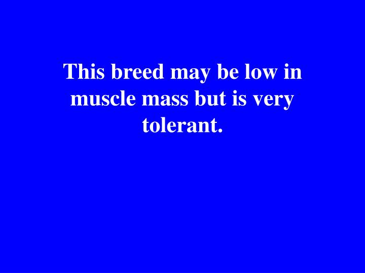 This breed may be low in muscle mass but is very tolerant.