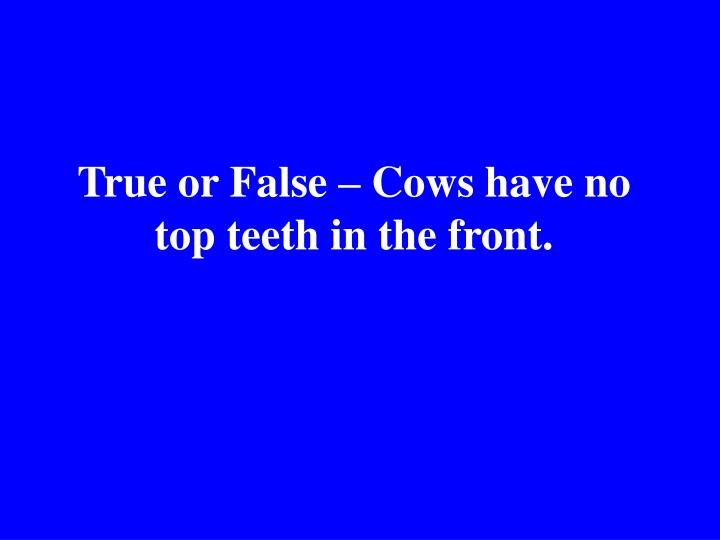 True or False – Cows have no top teeth in the front.