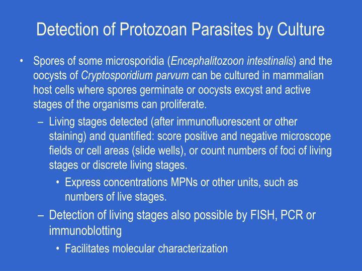 Detection of Protozoan Parasites by Culture