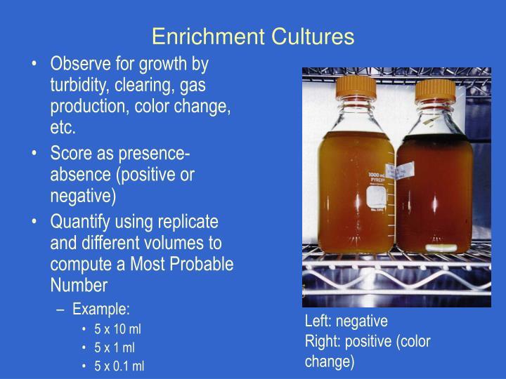 Enrichment Cultures