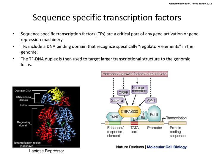 Sequence specific transcription factors