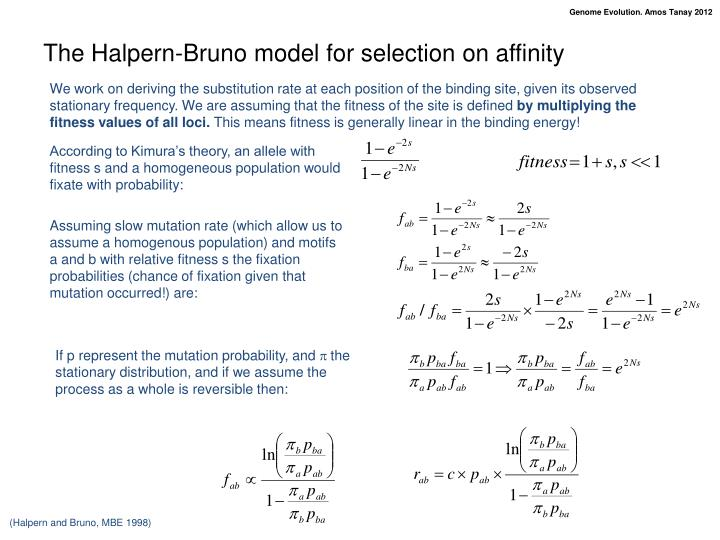 The Halpern-Bruno model for selection on affinity