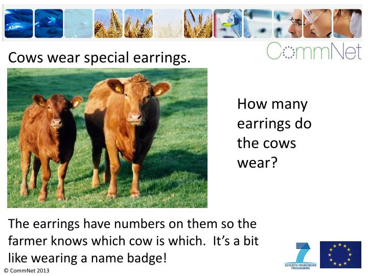 Cows wear special earrings.