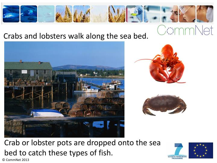 Crabs and lobsters walk along the sea bed.