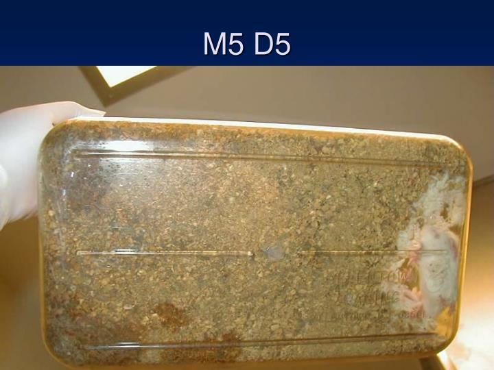 M5 D5