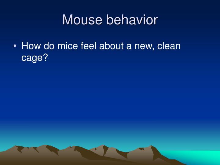 Mouse behavior