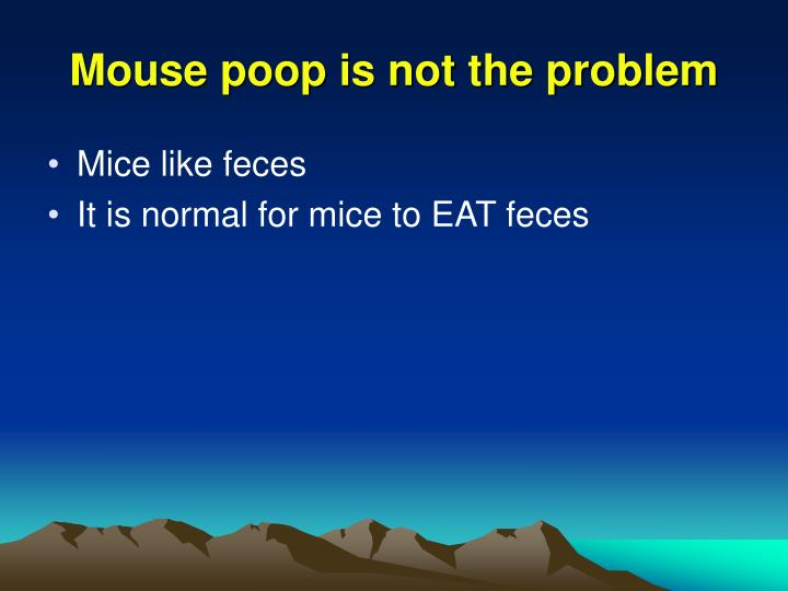Mouse poop is not the problem