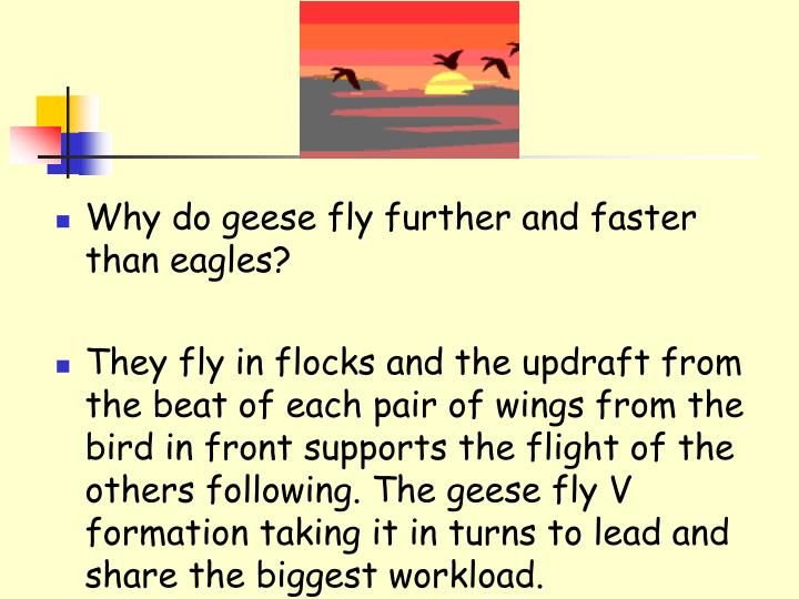 Why do geese fly further and faster than eagles?
