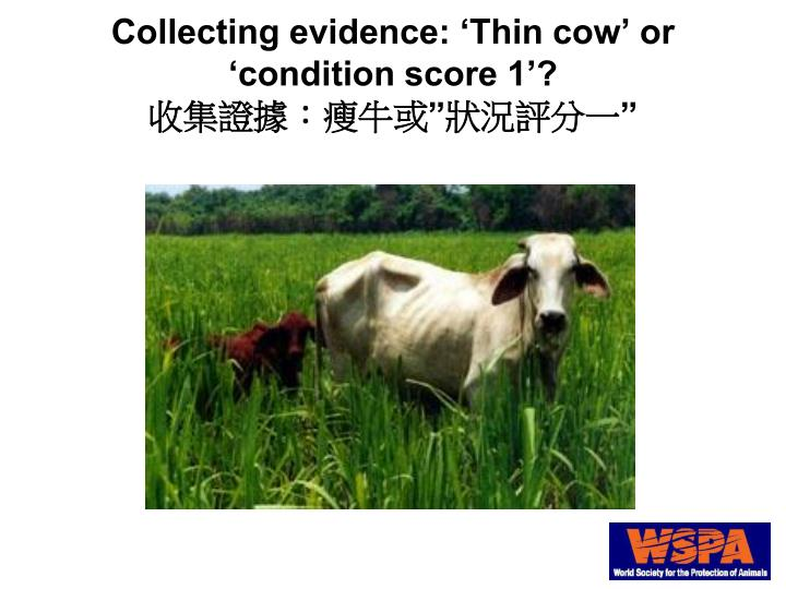 Collecting evidence: 'Thin cow' or 'condition score 1'?