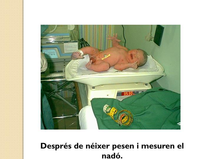 Després de néixer pesen i mesuren el nadó.