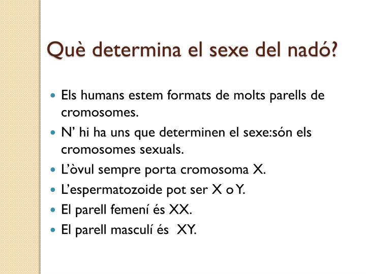 Què determina el sexe del nadó?