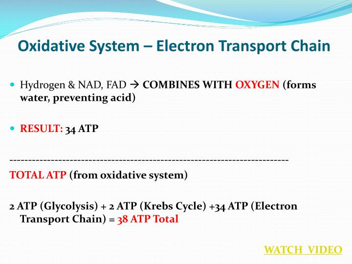 Oxidative System – Electron Transport Chain