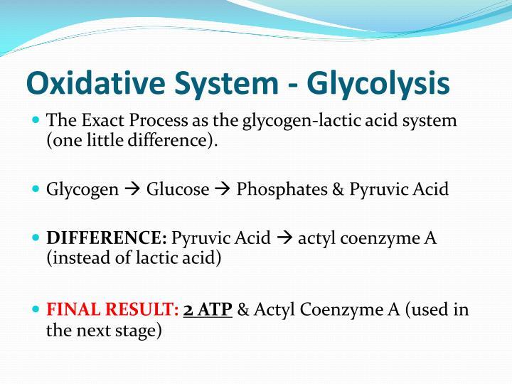 Oxidative System - Glycolysis