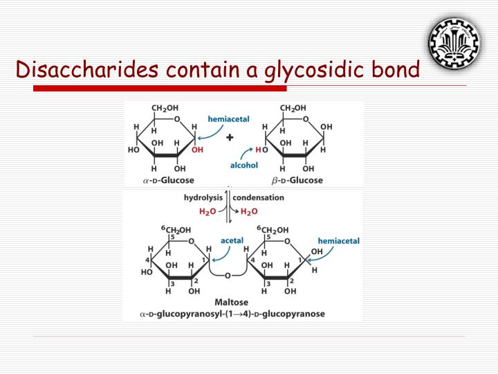 Disaccharides contain a glycosidic bond