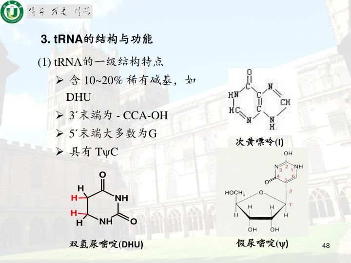 3. tRNA