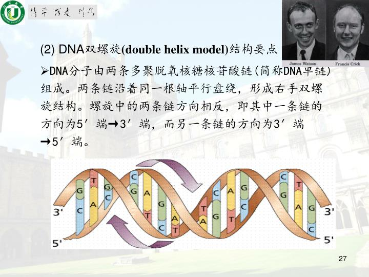 (2) DNA