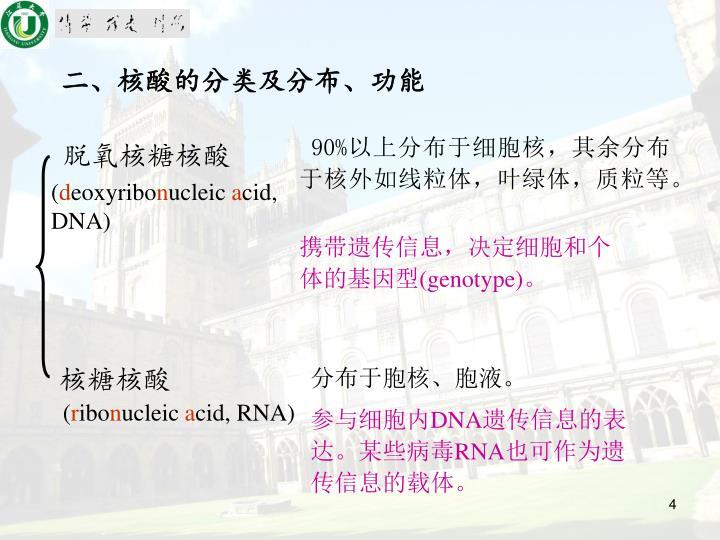 二、核酸的分类及分布、功能