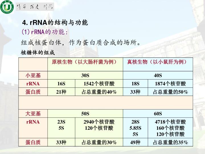 4. rRNA