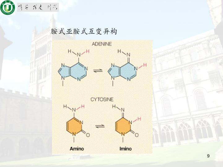 胺式亚胺式互变异构