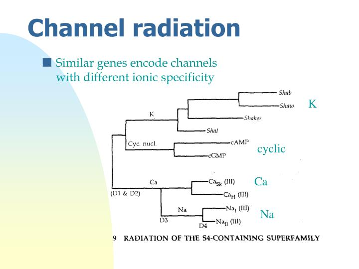 Similar genes encode channels with different ionic specificity